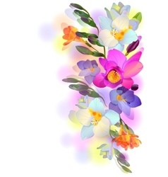 background with gentle freesia flowers and vector image vector image
