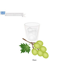 Ouzo or greek aperitif a traditional dink vector