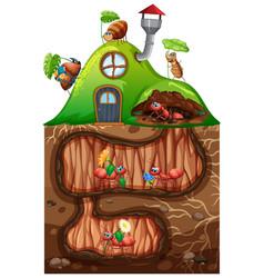 Scene with ants living underground in garden vector