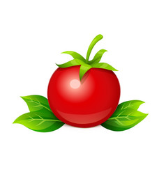 Tomato ripe vegetable vector