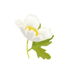 anemone snowdrop favorite garden plant vector image vector image
