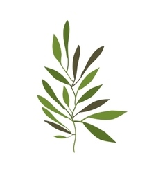Branches with leaves decoration vector image