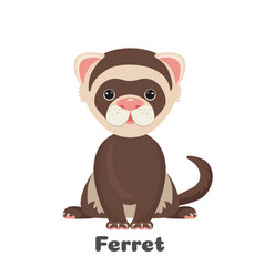 Ferret animal with wide open eyes vector