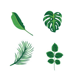 Green leaves tropical palm plants and trees vector