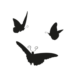 image flying butterflies on a white background vector image