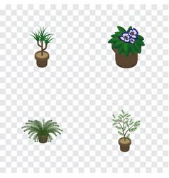 Isometric houseplant set of houseplant fern vector