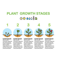 Plant growth stages infographics line art icons vector