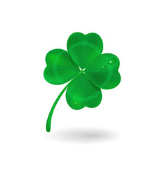 realistic four-leaf clover vector image