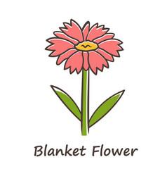 Blanket flower red color icon gaillardia aristata vector