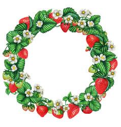 fresh watercolor strawberry wreath vector image