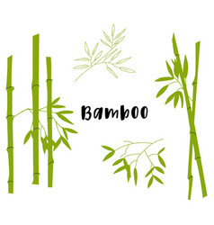 Green color flat design bamboo plants vector