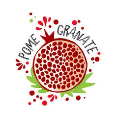 hand draw colored pomegranate vector image
