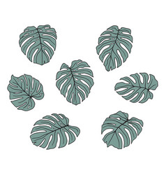 monstera leaves vector image