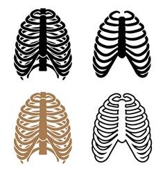 Human rib cage symbols vector