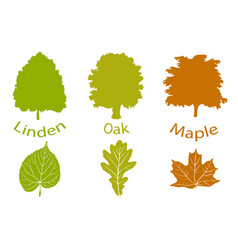 The set of simple icons of trees and leaves vector