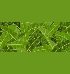 tropical banana leaf background vector image