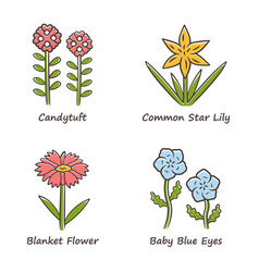 Wild flowers color icons set candytuft common vector