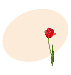 hand drawn of side view red tulip flower vector image vector image
