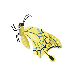 beautiful flying butterfly insect vector image