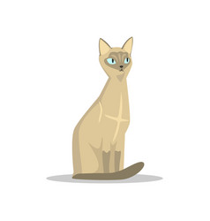 Cartoon siamese cat with blue eyes large ears vector