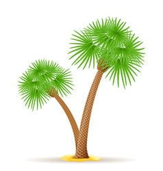 palm tree 23 vector image