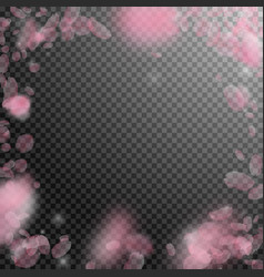 Sakura petals falling down romantic pink flowers vector