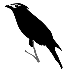 silhouette of waxwing vector image