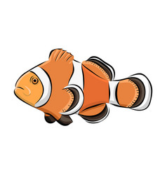 hand drawn clown fish vector image