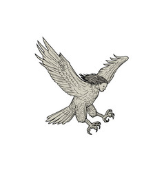 harpy swooping drawing vector image vector image