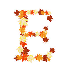 Autumn maples leaves letter vector