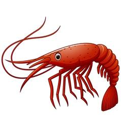 Cute shrimp cartoon vector