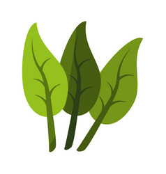three leaves icon image vector image