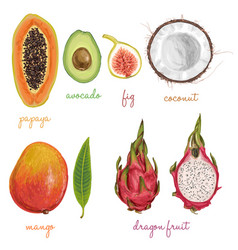 exotic juicy delicious fruits vector image