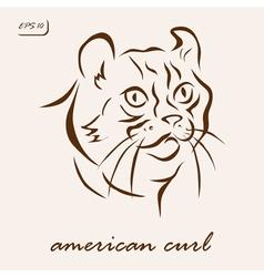 American Curl vector image vector image