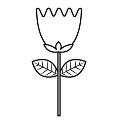 flower tulip stem petals decoration vector image