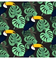 Monstera tropic plant leaves and toucan bird vector image