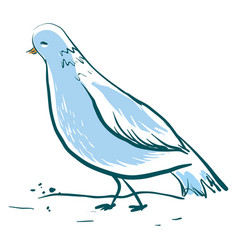 beautiful blue dove on white background vector image