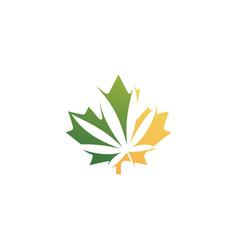 canadian cannabis logo icon for hemp leaf vector image