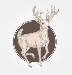 deer vintage engraved vector image
