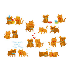 funny dog and cat set cute domestic pet animals vector image