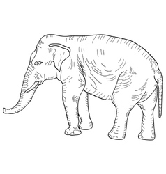 Sketch a large African elephant on white vector