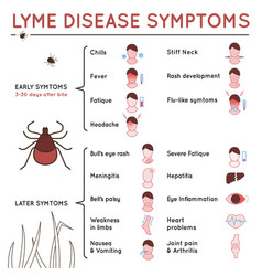 Tick disease poster vector