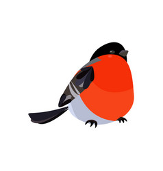 colorful icon of bird bullfinch vector image