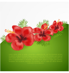 Exotic tropical hibiscus flowers vector