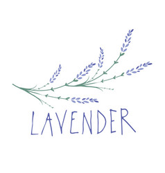 lavender flower logo design text hand drawn vector image