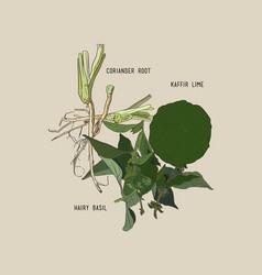 thai spices ingredient set sketch vector image