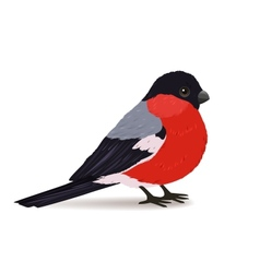 Winter bullfinch bird vector