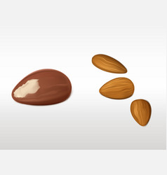 almonds and brazilian nut set isolated on white vector image