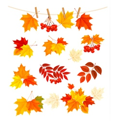 Autumn background with colorful leaves Design vector image