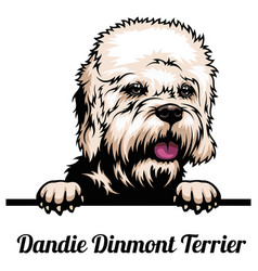 dandie dinmont terrier - dog breed color image vector image